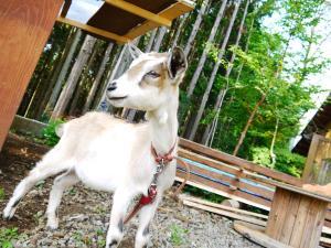 森のたね 猟師キャンプ 小ヤギ