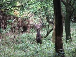 森のたね 野生動物インタープリター研修会
