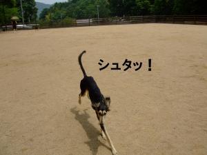 20120602+縺輔¥繧峨■繧・s_convert_20120602184806