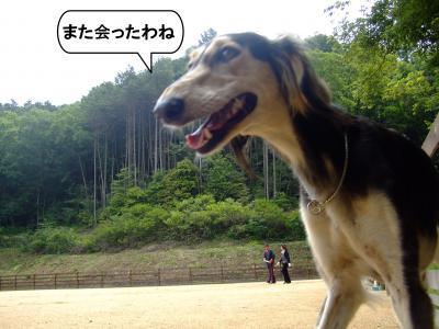 20120602+縺輔¥繧峨■繧・s2_convert_20120602184829