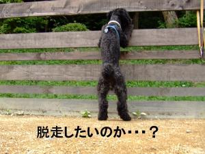20120602+閼ア襍ー_convert_20120602192513