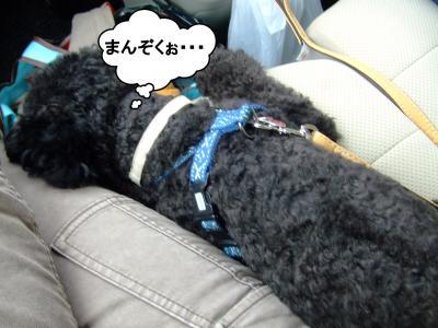 20120602+蟶ー繧願サ雁・_convert_20120602192627