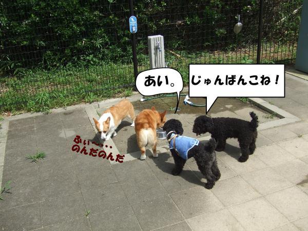 ・撰シ撰シ廟convert_20120717221912