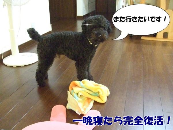 2012080515531158f.jpg