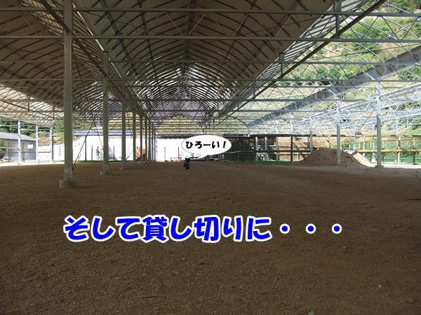 20120917214043ddf.jpg