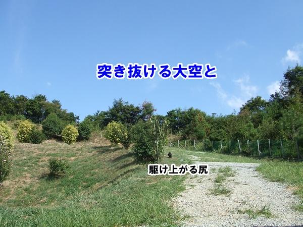 20120917221326cbc.jpg