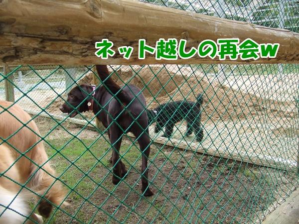 201210072141083db.jpg
