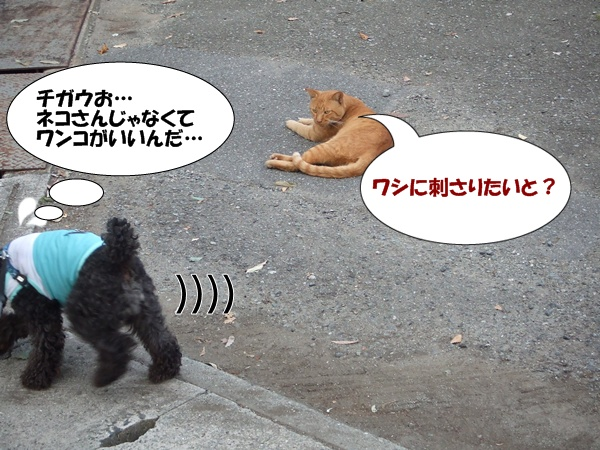 20121012215930ae9.jpg