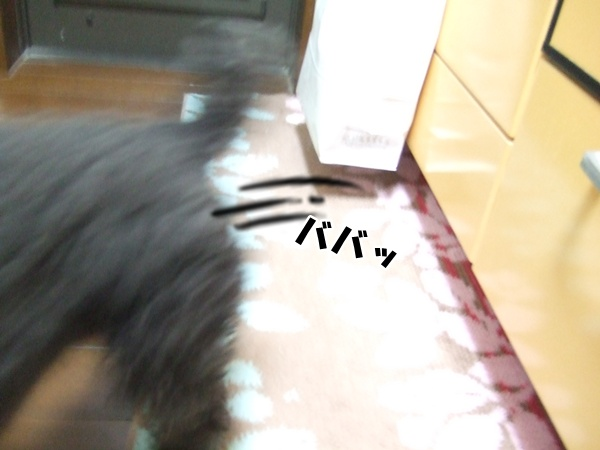 201211082112464e9.jpg