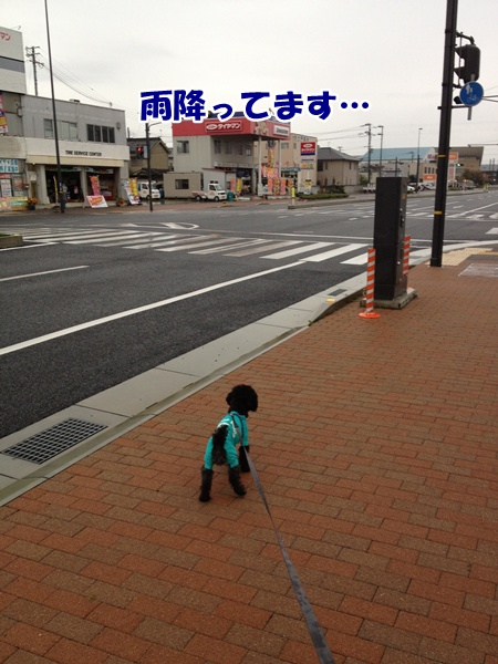 20121111214407977.jpg