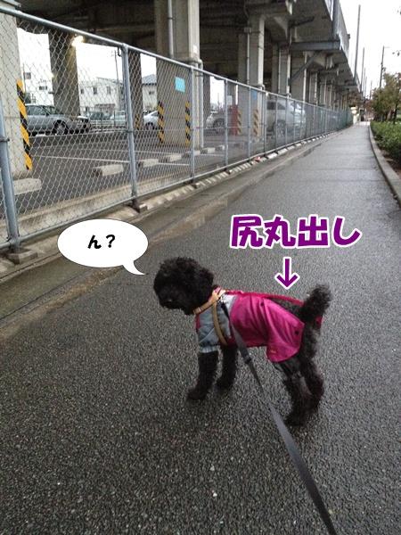 20121111220645daf.jpg