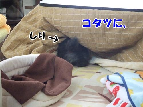 20121114224104c01.jpg