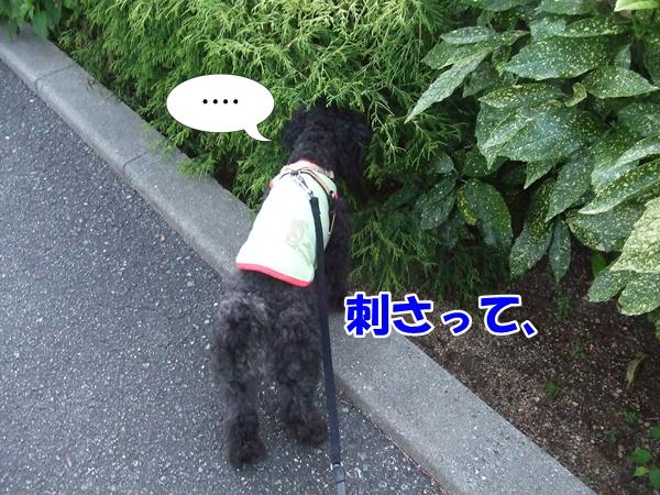 2012111422410500c.jpg
