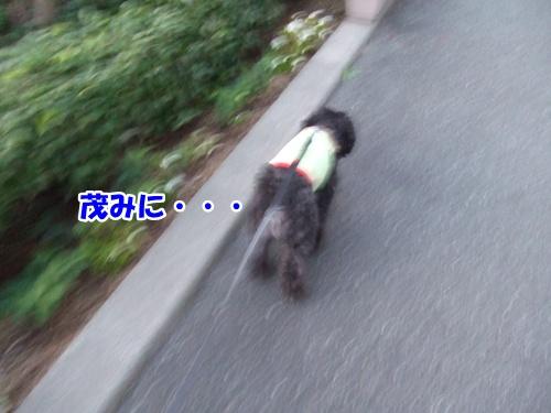 201211142241056b5.jpg