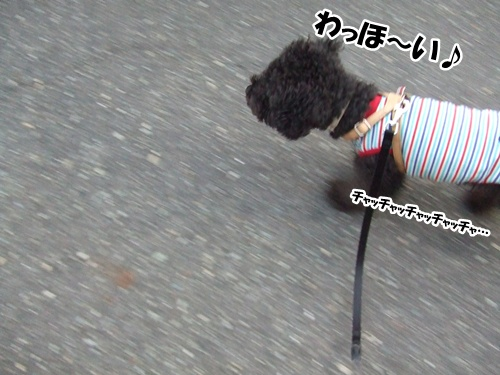 20121120224254ad0.jpg