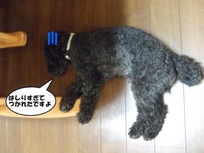 DSCF1807_convert_20120615210126.jpg