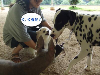 DSCF2097_convert_20120624211207.jpg