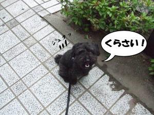 DSCF2180_convert_20120704204321.jpg