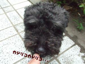 DSCF2181_convert_20120704204341.jpg