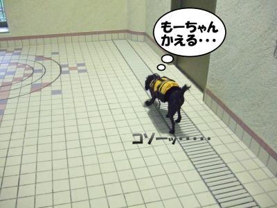 DSCF2269_convert_20120702222605.jpg