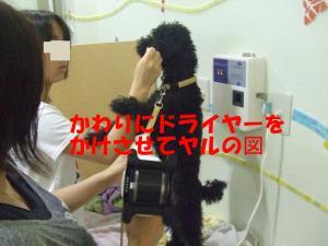 DSCF2292_convert_20120703213754.jpg