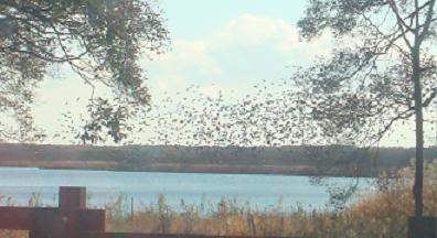 ウトナイ湖の鳥