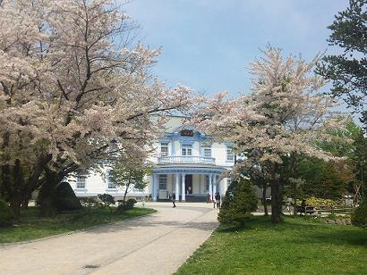 豊平館 桜