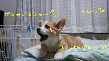 めおーーん!
