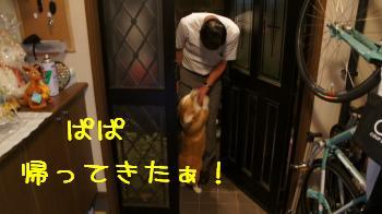 玄関下りちゃいけません!