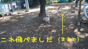 初☆ハードル