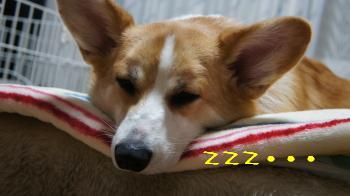 疲れてねんこ