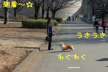 小金井公園到着