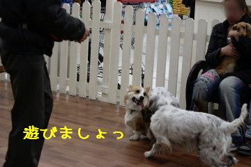 ティアラちゃん登場