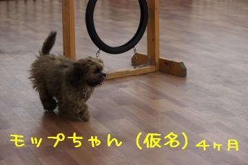 モップちゃん
