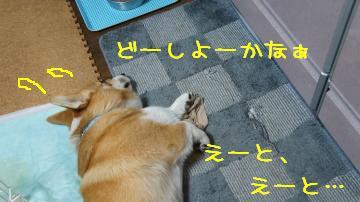 また犯犬М