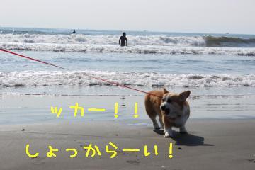 海水しょっぺー