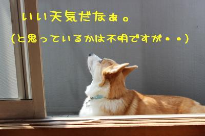 いい天気だ。