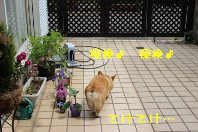 お庭に放牧
