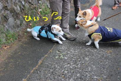 JRTちゃん逃げ腰
