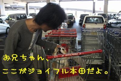 ジョイフル本田