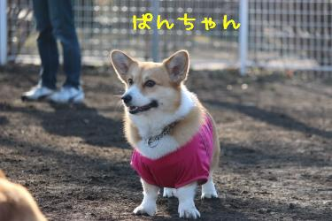 ぱんちゃん