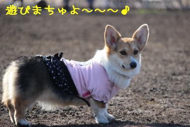 遊びまちゅよ~☆
