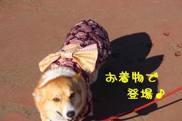 ナデシコぱんちゃん
