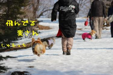 残念な飛行犬