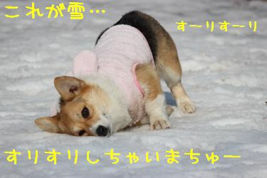 初めての雪でちゅー。
