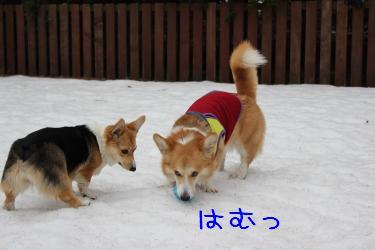 ノア&萌香
