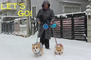 雪遊びにれっつごー。