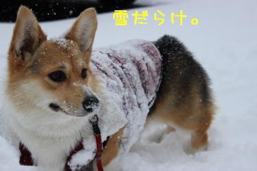 お鼻が雪だらけ