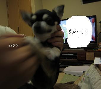 IMG_7140⑤