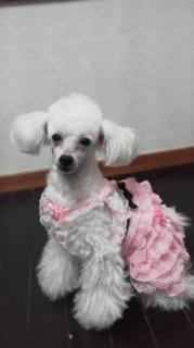 moblog_695eba46.jpg